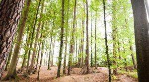 Walderlebnispfad im Grubet © Landkreis Aichach-Friedberg